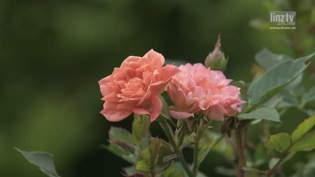 60 Jahre Botanischer Garten