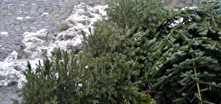 Christbäume Kompost